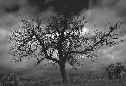 Tree Landscape Mystich Nature Trees Natural Mood