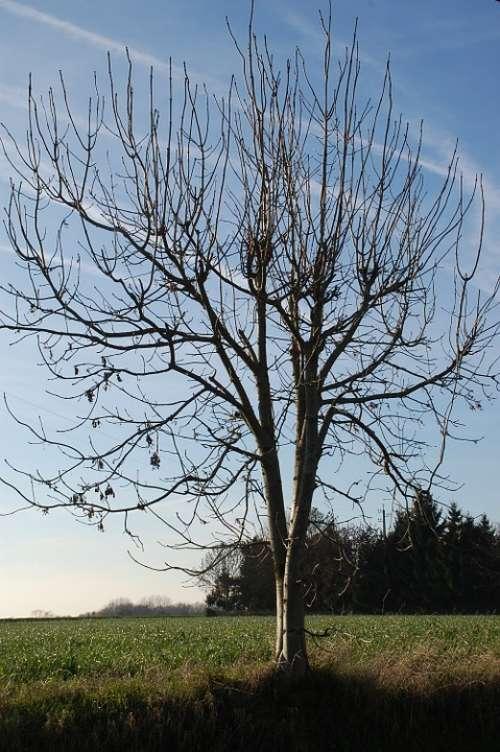 Tree Nature Winter Landscape
