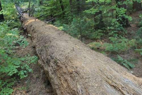 Tree Death Nature