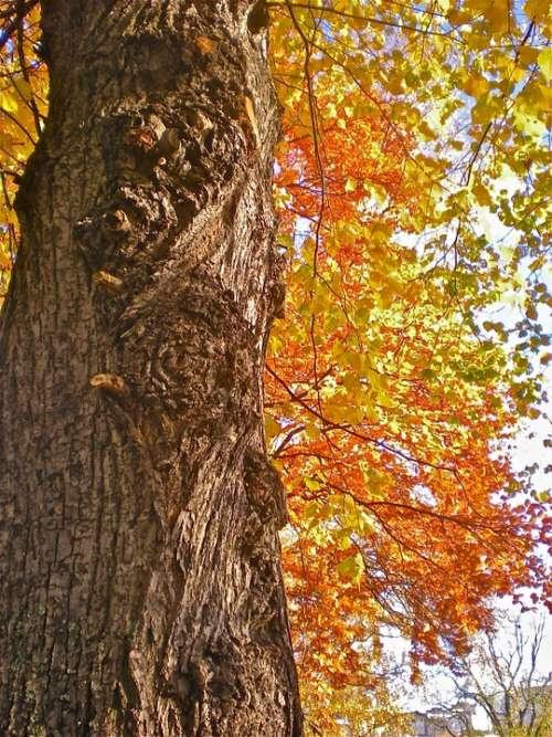 Tree Tribe Autumn Leaves Orange Yellow Nature