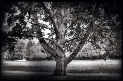 Tree Trees Landscape Leaves Leaf Nature