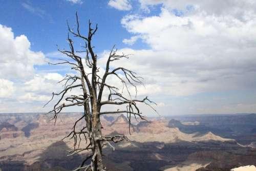 Tree Death Colorado Contrast