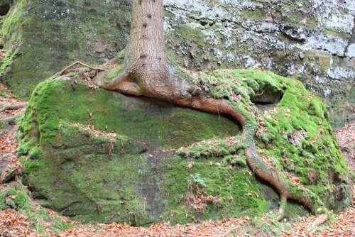 Tree Root Overgrown Nature Trees Tree Root