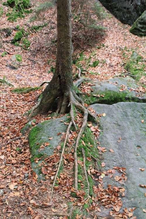 Tree Root Overgrown Nature Trees Bark Tree Root