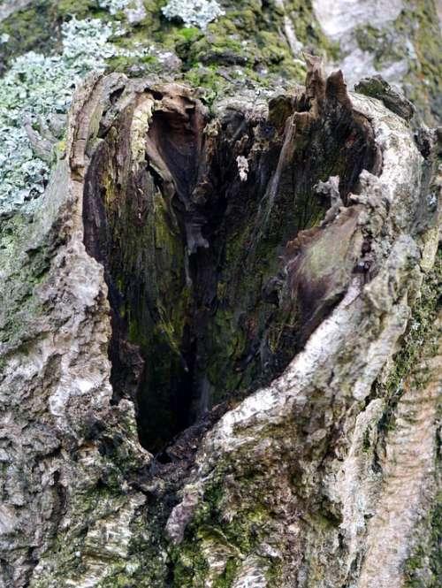 Tree Wood Hole Heart