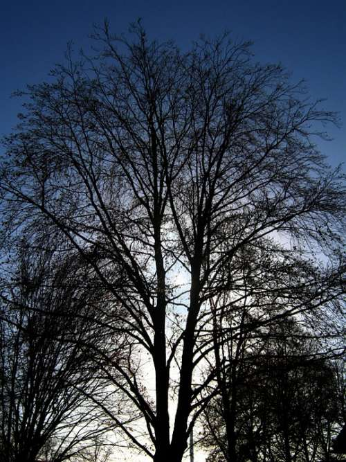 Tree Kahl Winter Branches Aesthetic Sky