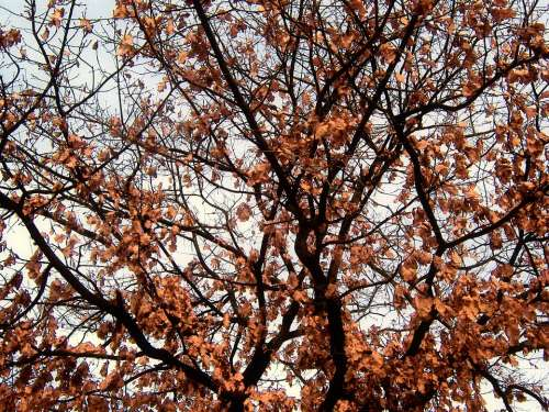 Tree Branch Branches Autumn Leaves Structure