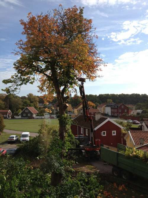 Tree Tree Trimming Autumn