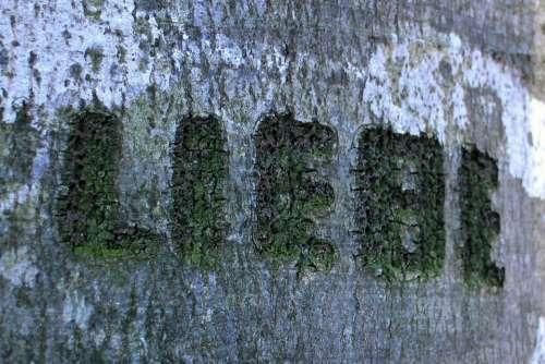 Tree Carved Name Symbol Engraved Eingeritzter Tree