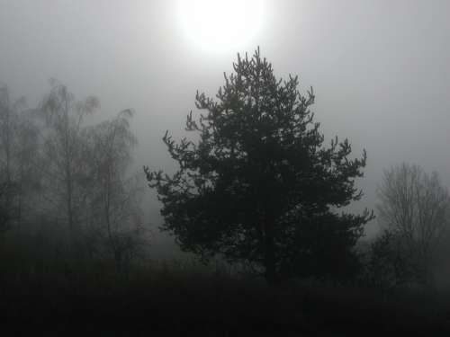 Tree Trees Fog Foggy Winter Wintry Winter Sun