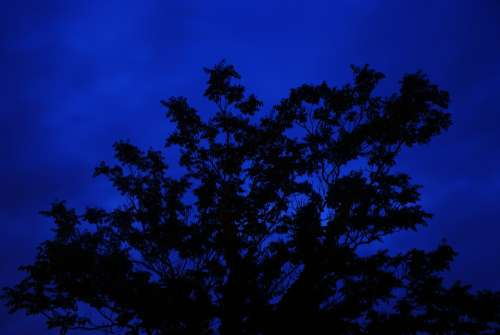 Tree Night Long Exposure Blue Silhouette
