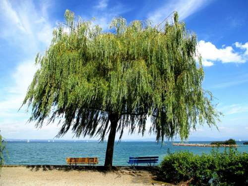 Tree Green Bench Color Blue Yellow Bank Lake