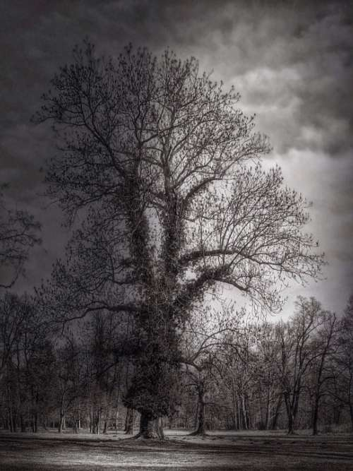 Tree Night Mood Dark Branches Atmosphere