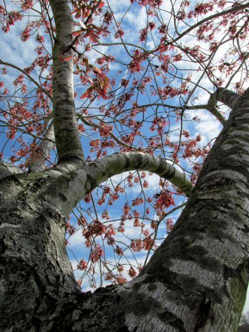 Tree Branches Leaves Sky Curves Stripes Bark