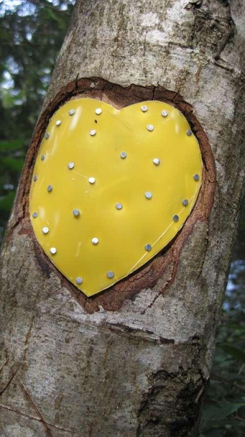 Tree Heart Nature