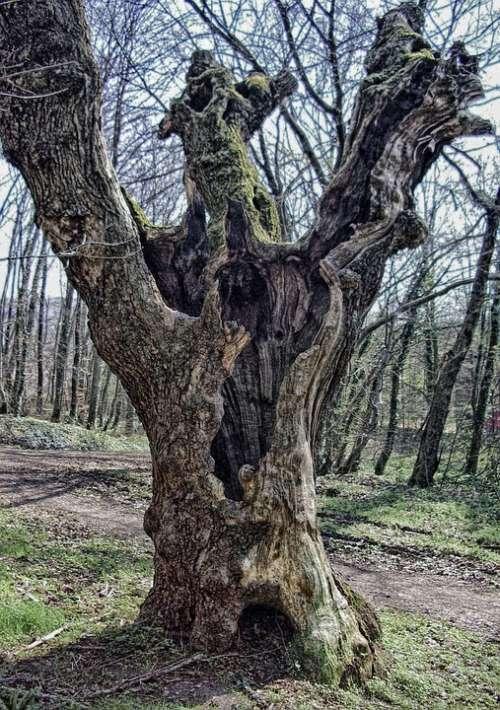 Tree Log Autumn Old Dead Tree Siebengebirge Bonn
