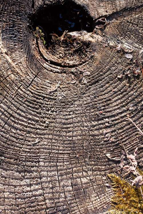 Tree Tree Stump Like Traces Weathered Annual Rings