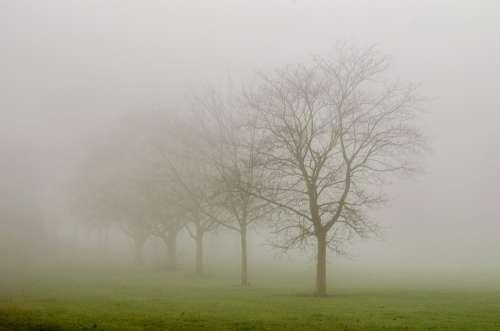Tree Trees Fog Weather Seasons Autumn Winter