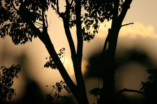 Tree Silhouette Sunset Orange Gold Glow