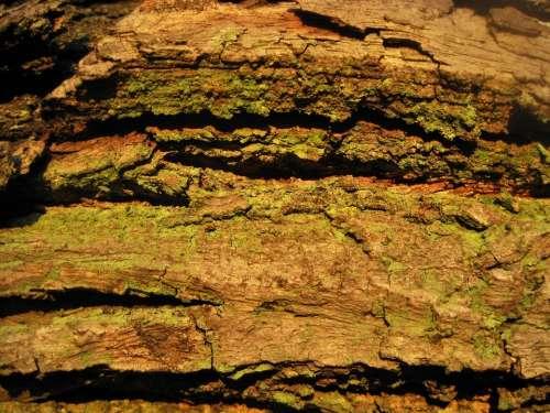 Tree Bark Rough Textured Cracked Moss Green