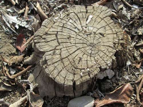 Tree Nature Plant Background Vegetation Stump