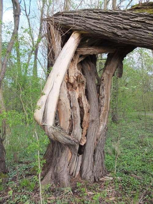 Tree Tribe Fragmented Log Bark Burst Forest