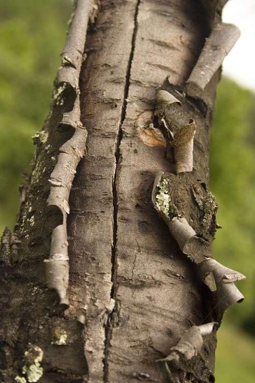 Tree Bark Structure Grey Nature Garden Flora