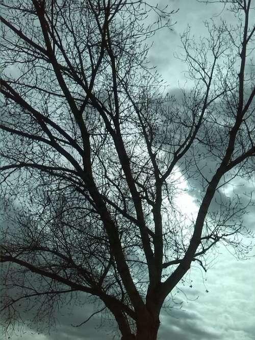 Tree Landscape Sky Clouds Dry Tree Nature Autumn