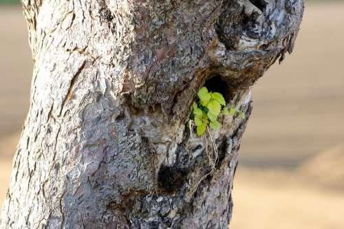 Tree Tree Stump Green Live Dead Plant Parasite