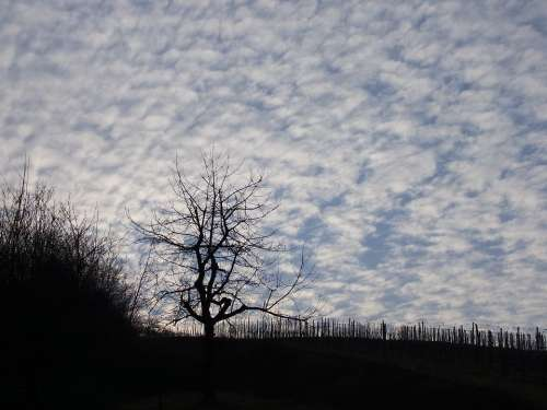 Tree Sky Nature Clouds Mood Rest