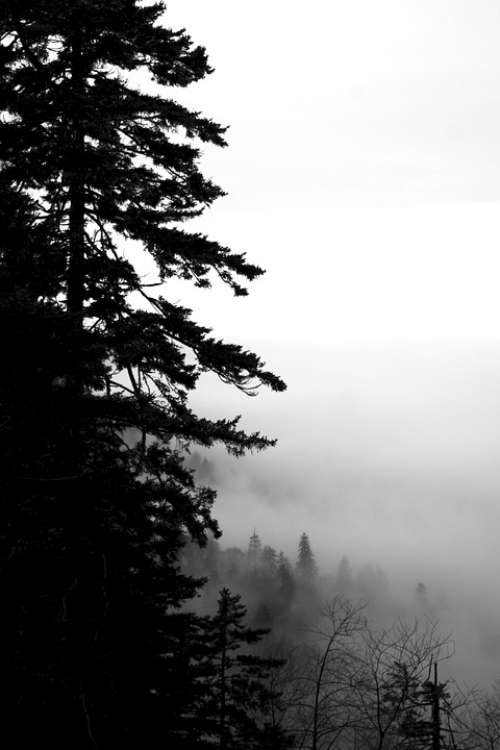 Tree Fog Mist Cloudy Mystical Dark Black