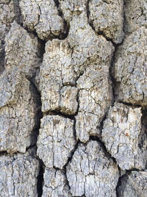 Tree Bark Texture Wood Trunk Nature