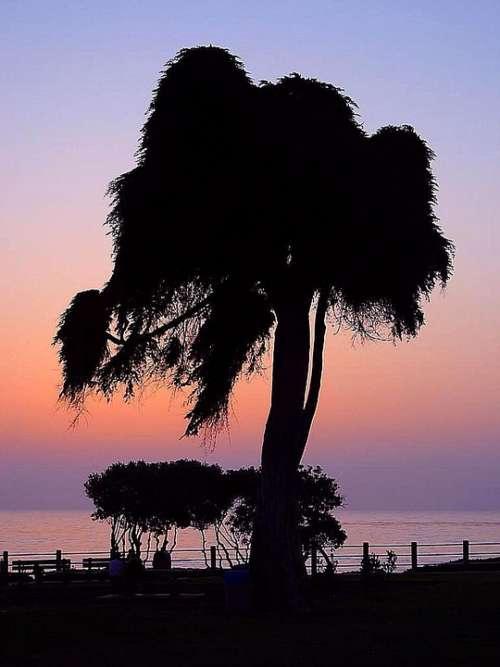 Tree Sunset Landscapes Nature