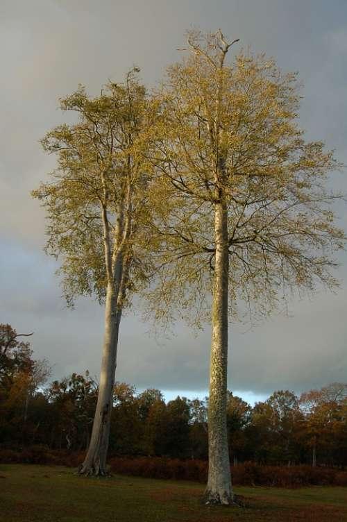 Tree Forest Leaf Natural Wood Light Leaves Woods