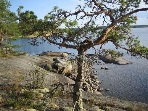 Tree Lake Landscape Nature