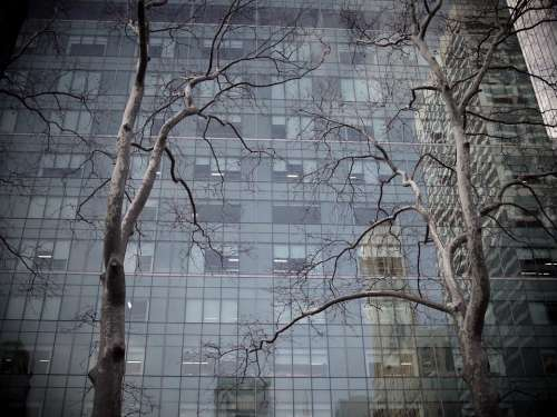 Tree Building Skyscraper Reflection Urban Forest