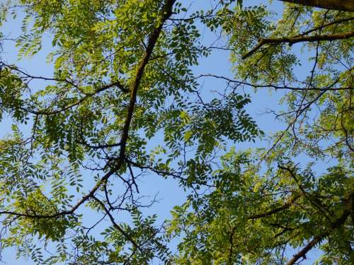 Tree Foliage Branches Clearances Sky Nature Green