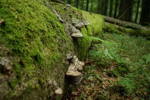 Tree Tree Fungus Green Beech Forest Moss