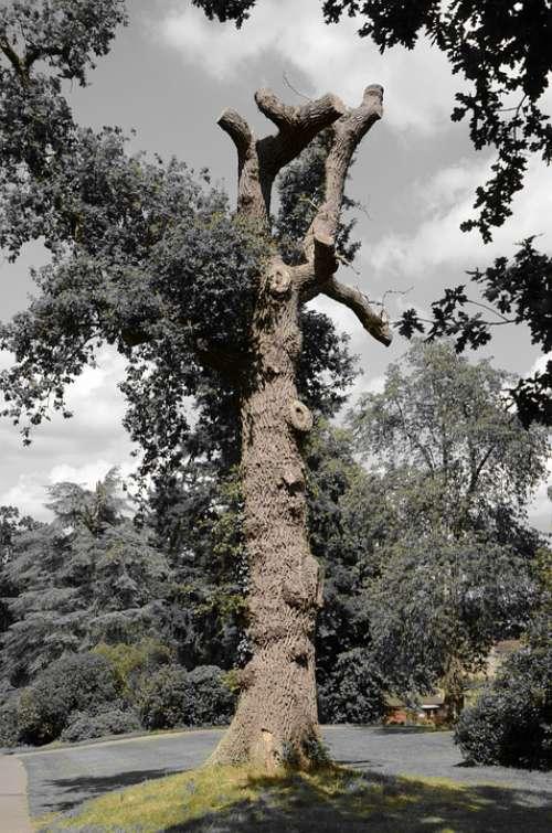Tree Nature Landscape Scene Drama Mood Impressive