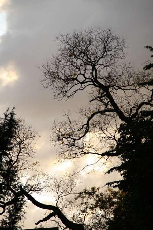 Tree Night Silhouette Aesthetic Kahl Backlighting