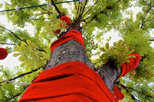 Tree Embroidered Street Art Knit Crown Wool Red