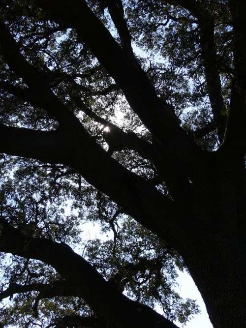 Tree Shadows Landscape
