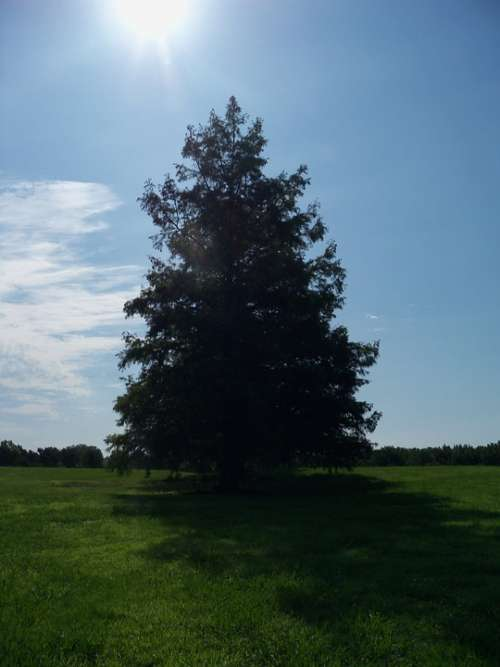 Tree Sunny Day Nature Green Outdoor Summer