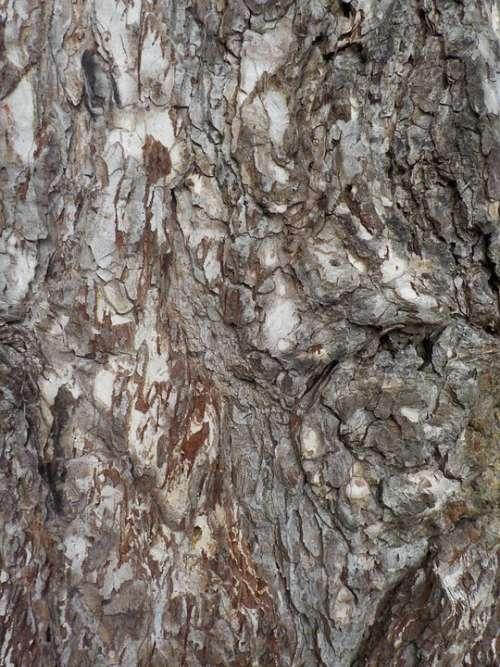 Tree Nature Bark