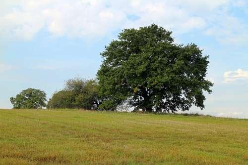 Tree Individually Nature Sky Meadow Green