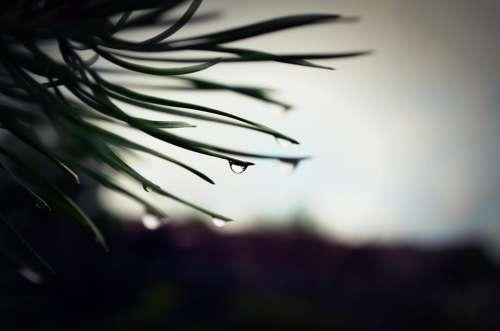 Tree Macro Drop
