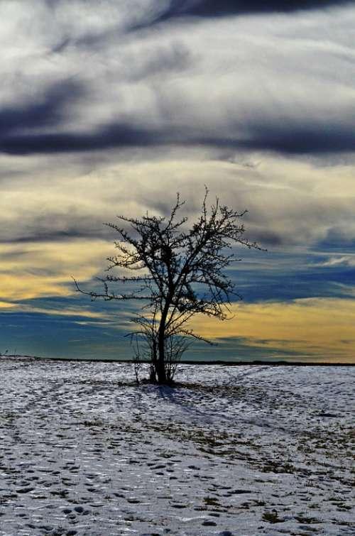 Tree Landscape Winter
