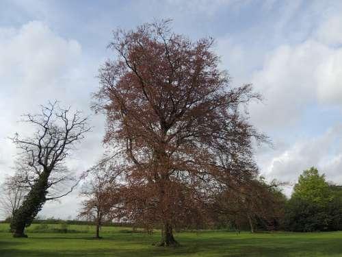 Tree Nature Green Landscape Natural Season