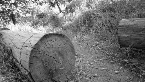 Tree Ruins Black And White