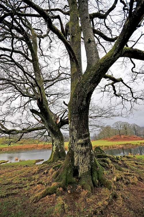 Tree Cumbria Water Nature Landscape Country